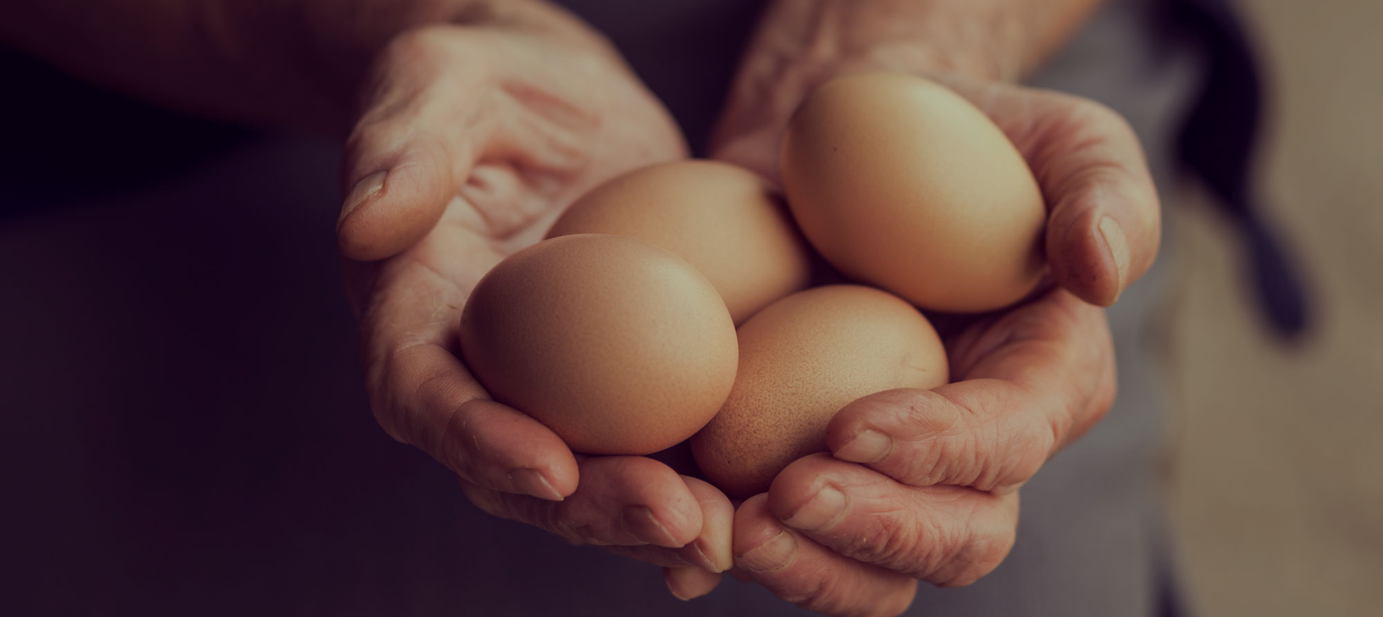 Close up of hands holding four eggs