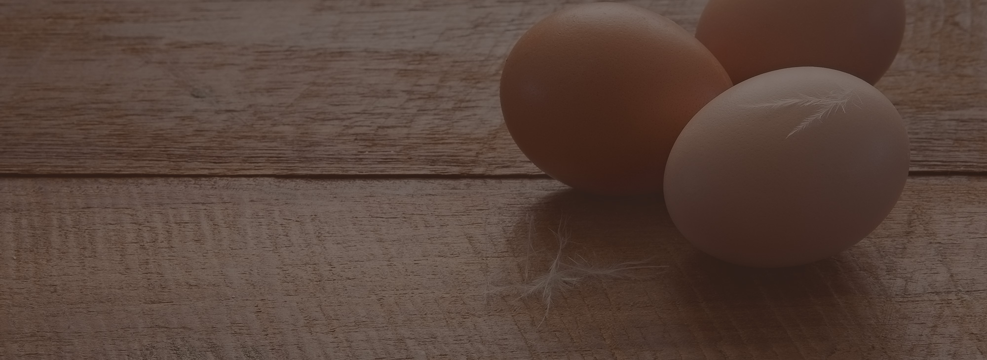 How Do Egg Farmers Treat Their Hens? | Sauder's Eggs