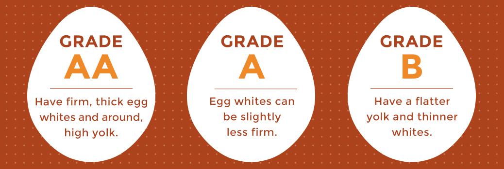 Different Egg Grades Explained