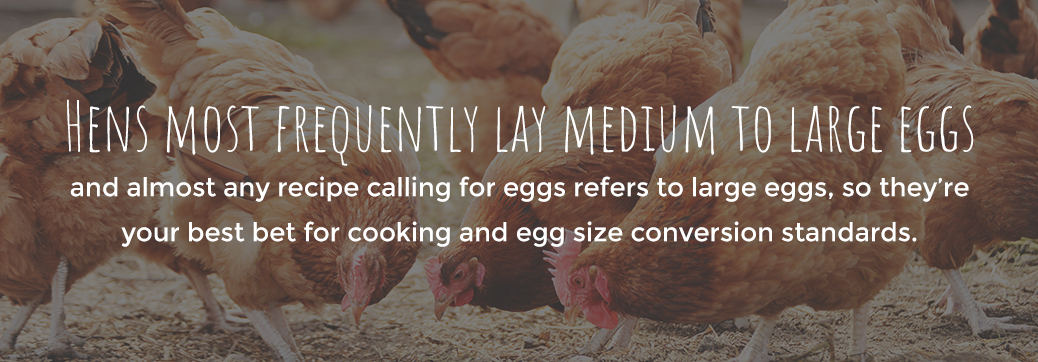 Hens Most Frequently Lay Medium to Large Egg Sizes