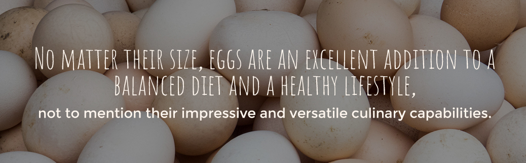 Eggs Can Balance a Diet and Lead to a Healthier Lifestyle