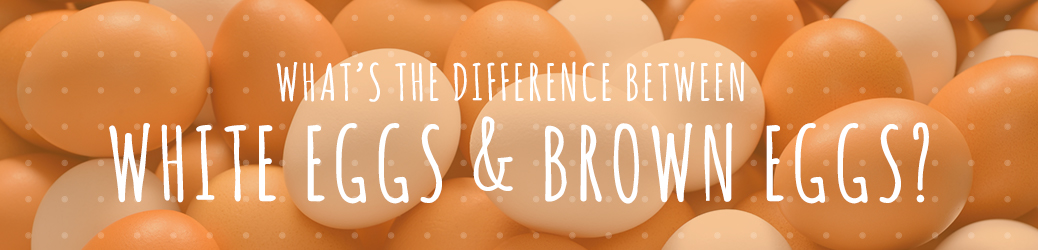 White Eggs and Brown Eggs Differences