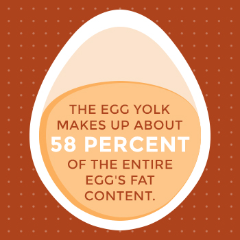 Egg Yolk Makes Up 58% of Egg's Fat