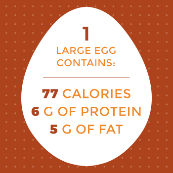 Contents of 1 Large Egg