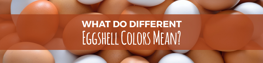 Eggshell Color Meanings
