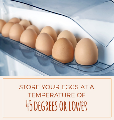 Egg Storage Temperature