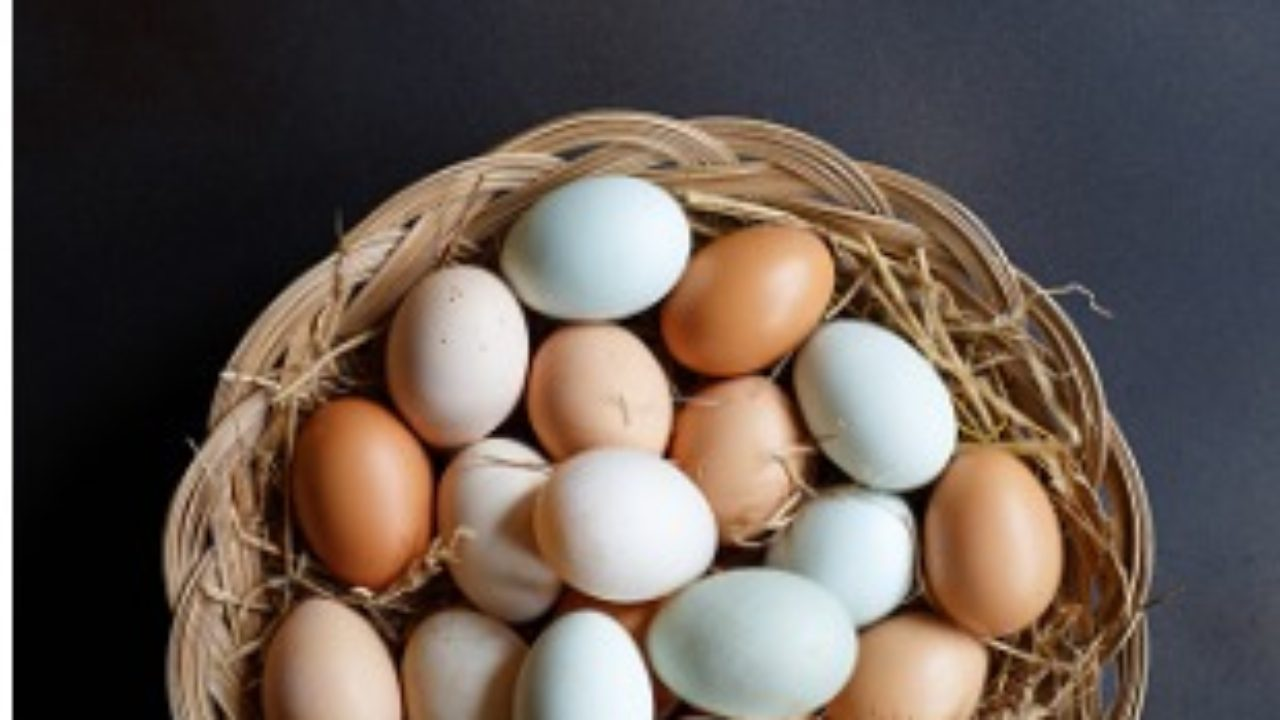 What Do Different Eggshell Colors Mean? | Answers Await
