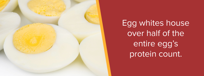 Egg whites house over half of the entire egg's protein count