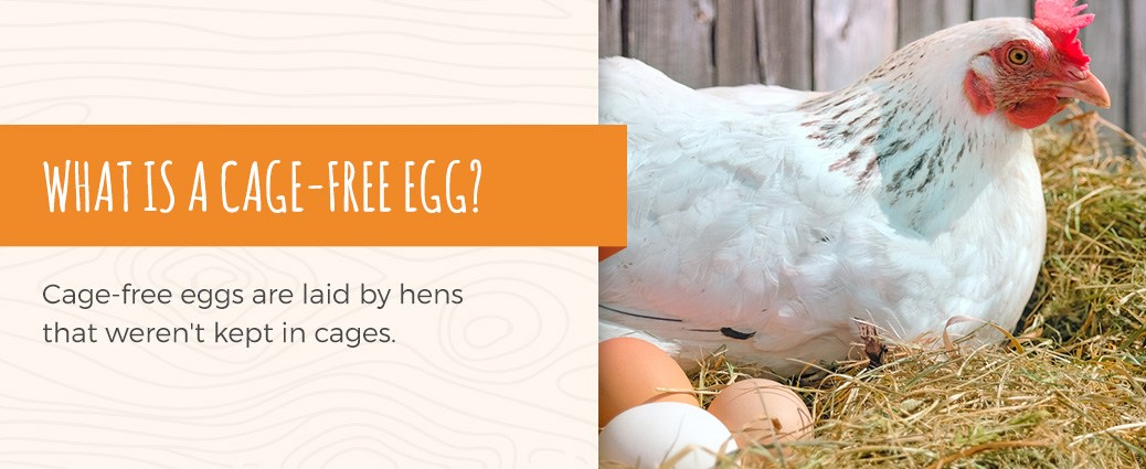 cage free eggs are eggs that were laid by hens who weren't in cages