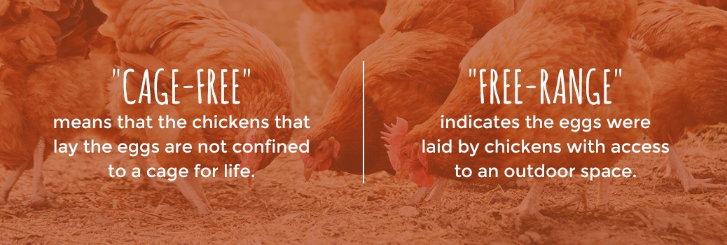 the difference between cage-free and free-range eggs
