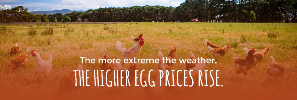 egg prices are impacted by extreme weather conditions