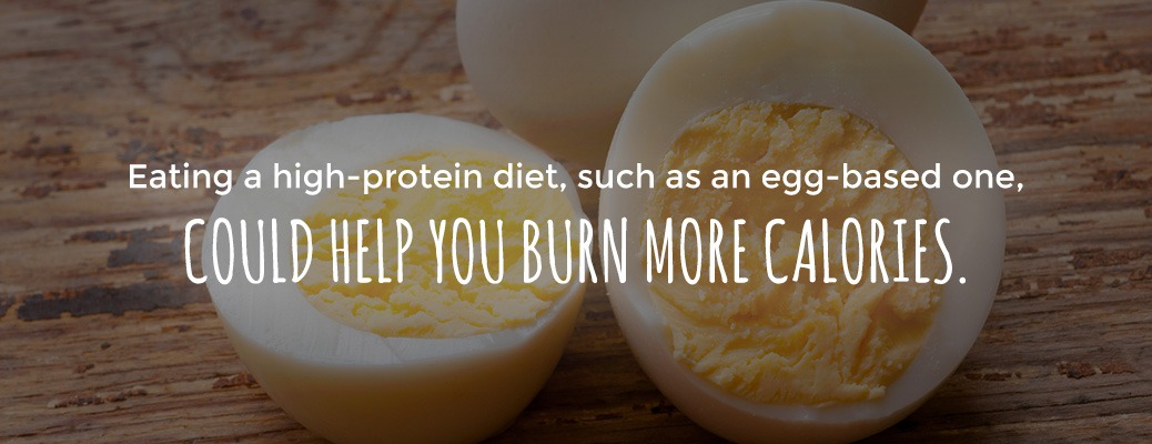 high-protein diets can help with weight loss