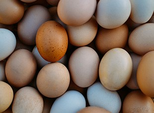 how much should eggs cost