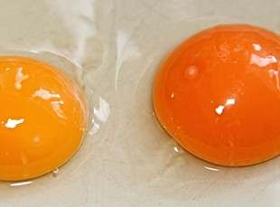 eggs with two yolks